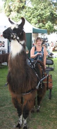 llama at OFFF